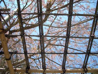 花菱アチャコの画像 p1_11