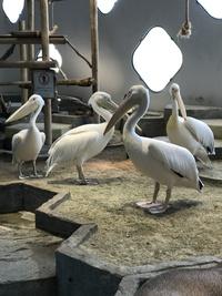 ららぽーと エキスポシティ 二フレル 水族館 動物園 変身写真サテライトドア スタジオ 体験